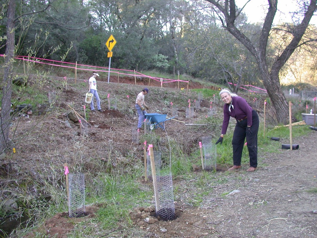 Volunteers have been hard at work at Canyon creek on Stagecoach Preserve, planting native flowers, shrubs and trees, and protecting them with wire cages so they will have a chance to grow to maturity.