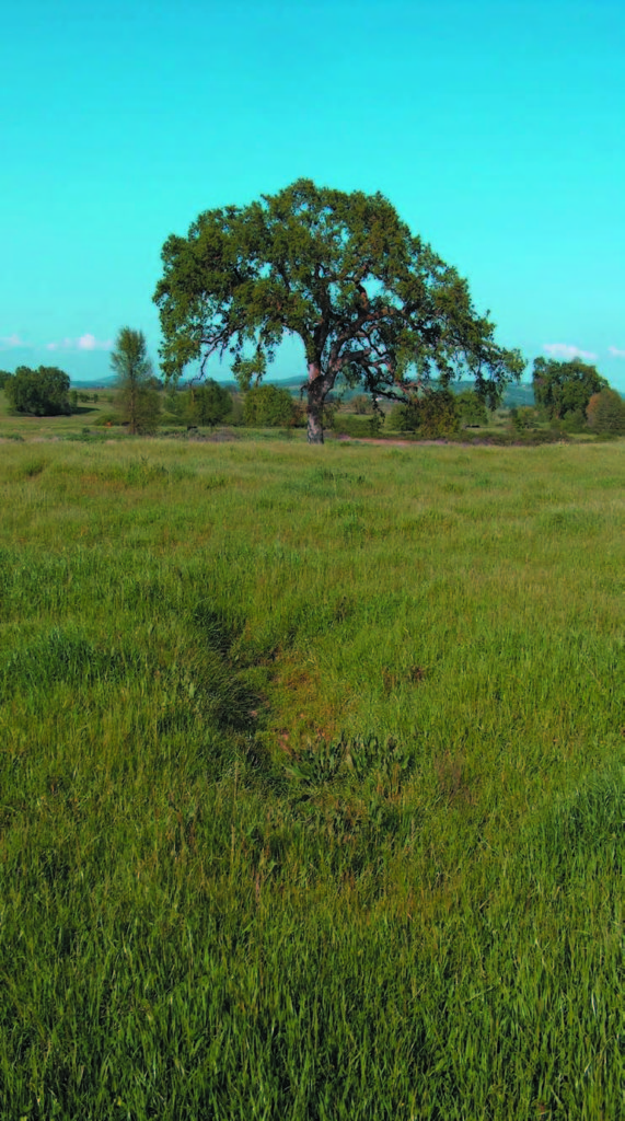 Annual grasslands and wetlands dominate the Hofman Ranch, which also contains a lush stream environment and oak woodlands along Doty Ravine.