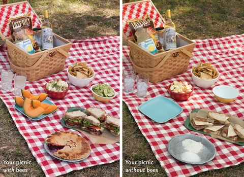 picnic dilemma