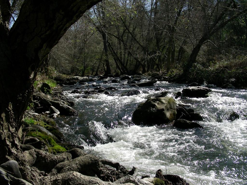Taylor Coon Creek