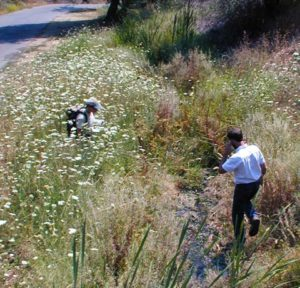 With the help of our new Americorps interns and volunteers from the community, PLT plans to complete restoration along Canyon Creek at the Stagecoach Preserve in Auburn this year, in preparation for adding a public trail.