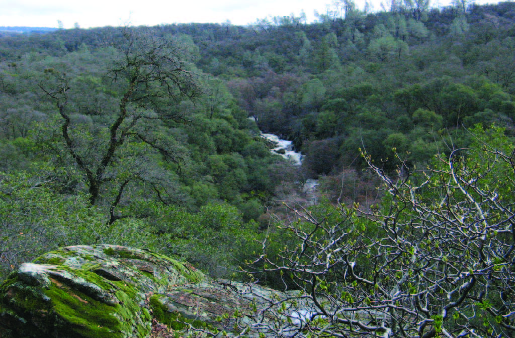 Coon Creek among oak woodlands at PLT's new 320-acre Taylor Ranch Preserve.