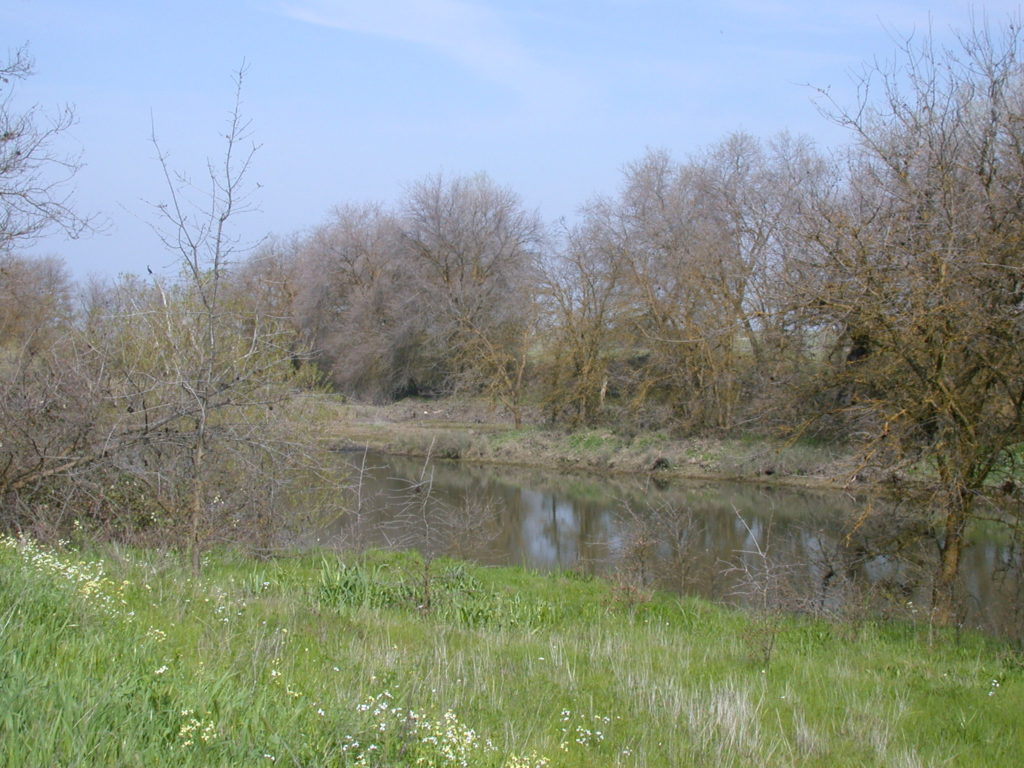 PLT's protection of 223 acres of the Reason Farms Environmental Preserve includes a scenic riparian corridor along Pleasant Grove Creek, helping to ensure protection of water quality.