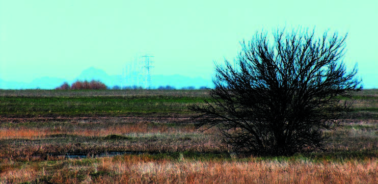 Looking north toward the Sutter Buttes from the grasslands of Toad Hill Ranch.